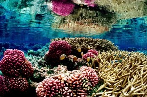 Due in large part to human pressure, up to 27 percent of monitored reef formations have been lost, and as much as 32 percent are at risk of being lost within the next 32 years. (Image source: USFWS Pacific via Flickr)