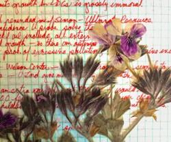 A peek inside Dana's journal reveals brilliant writing as well as dried flowers from her garden.
