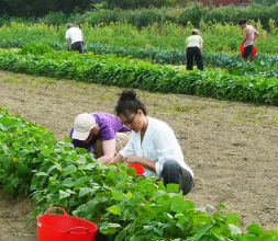 Meadows Institute staff volunteering at a local farm